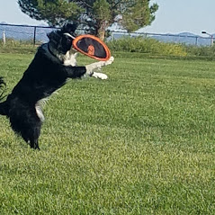 playing frisbee after installing solar screens